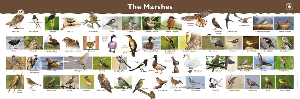 the-marshes